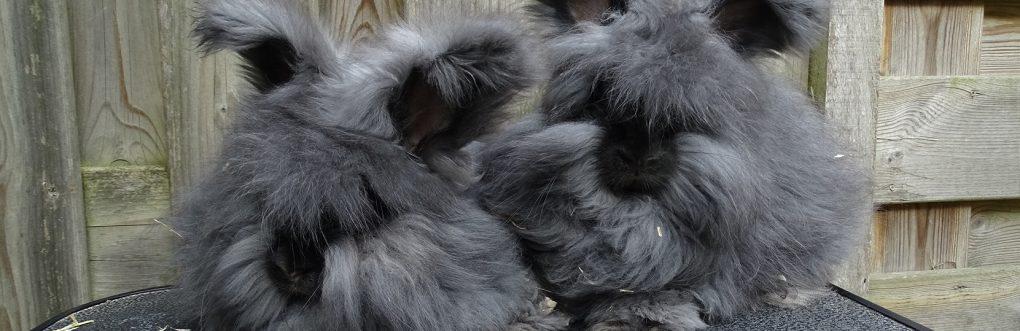 Angora konijn lidmaatschap
